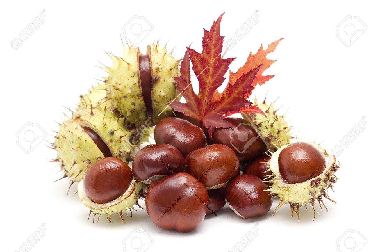 chestnuts and autumn leaves Stock Photo - 14968064
