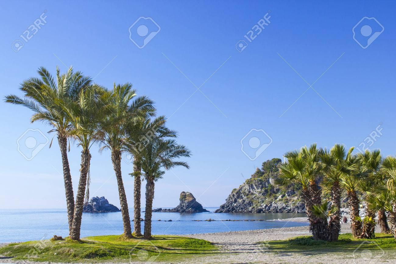 Carte Espagne Andalousie Almunecar.Palmiers Sur Une Plage A Almunecar Andalousie Costa Del Sol