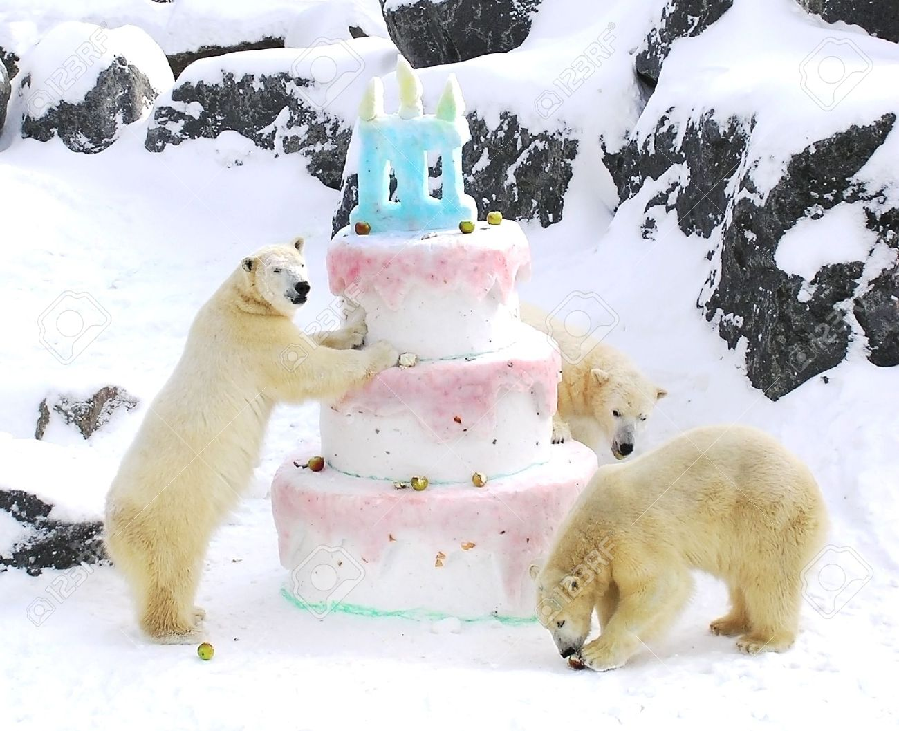 Drei Eisbaren Feiern Ihren Geburtstag Mit Einem Riesigen Kuchen Aus