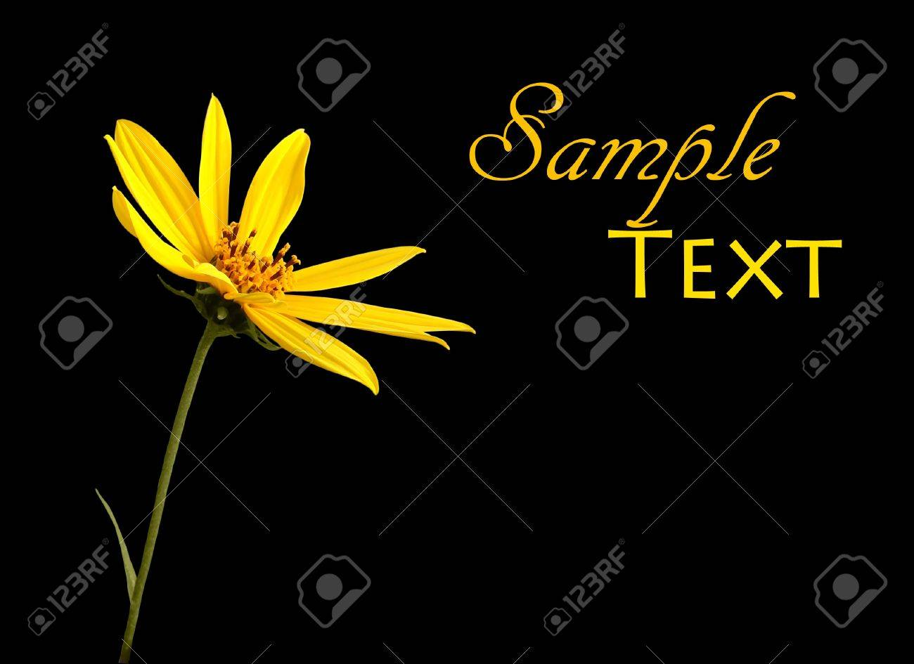 Single yellow flower on black background with copy space. Stock Photo - 9466270