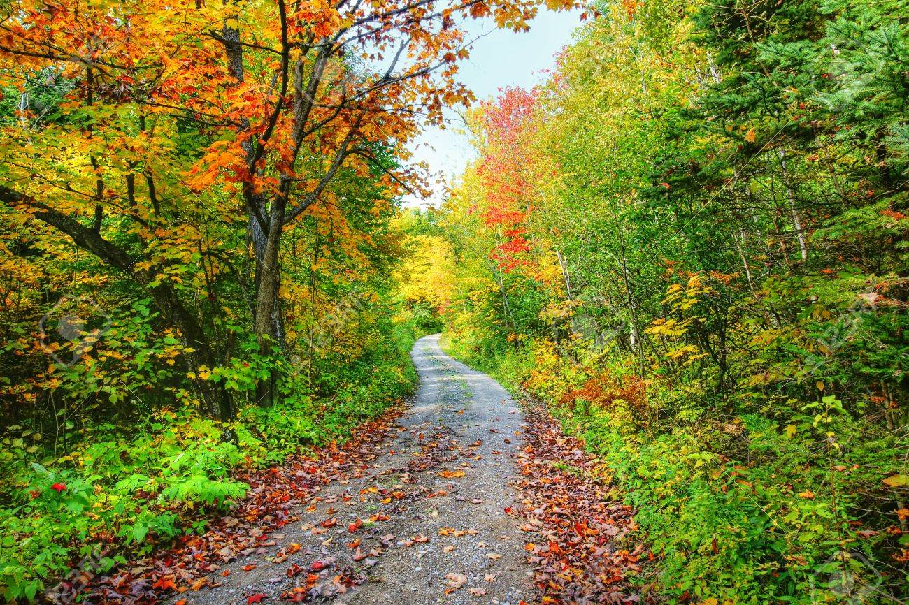 Road In The Beautiful Forest And Colorful Trees Of Fall. Stock Photo ...