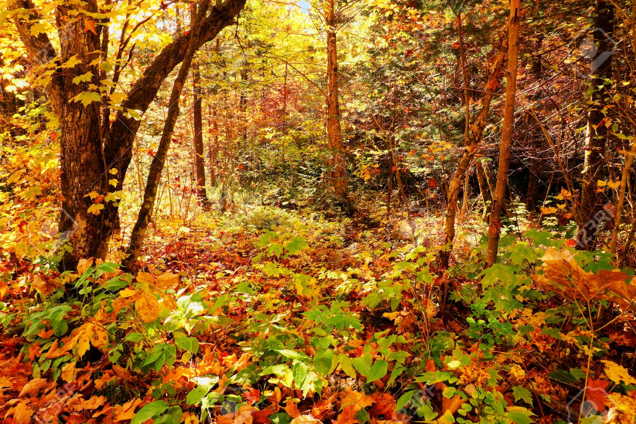 Beautiful Enchanted Forest During Fall Or Autumn Great Fairy Tale Background Hdr Stock Photo