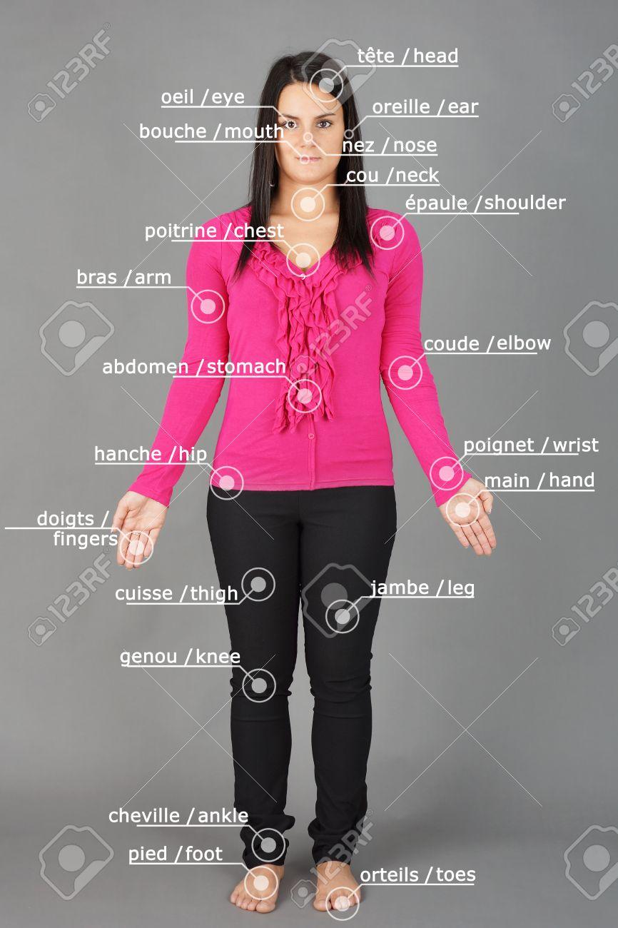 Menschliche Anatomie Oder Körper: Frau Posiert Auf Grau Mit ...