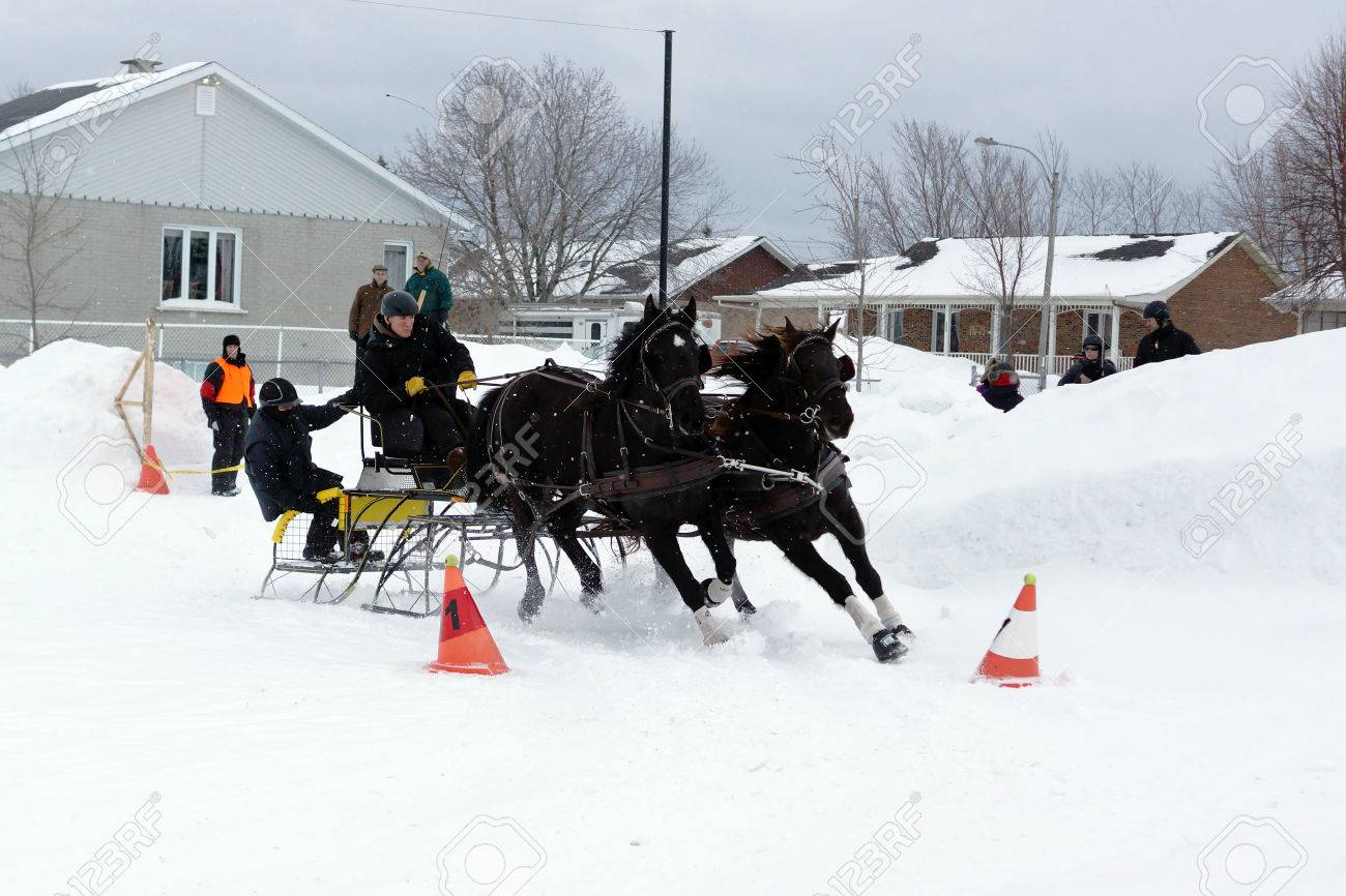 quebec canada january 22 canadian horse pulling sleigh in stock