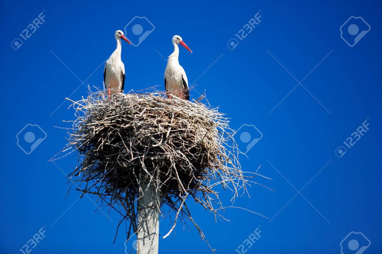 Storks on a background of blue sky - 30741721