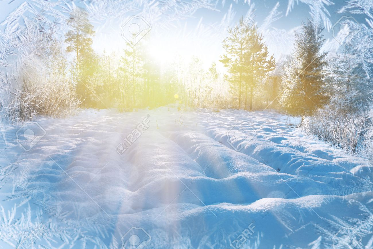 Winter background, landscape. Winter trees in wonderland. Winter scene. Christmas, New Year background - 36916943