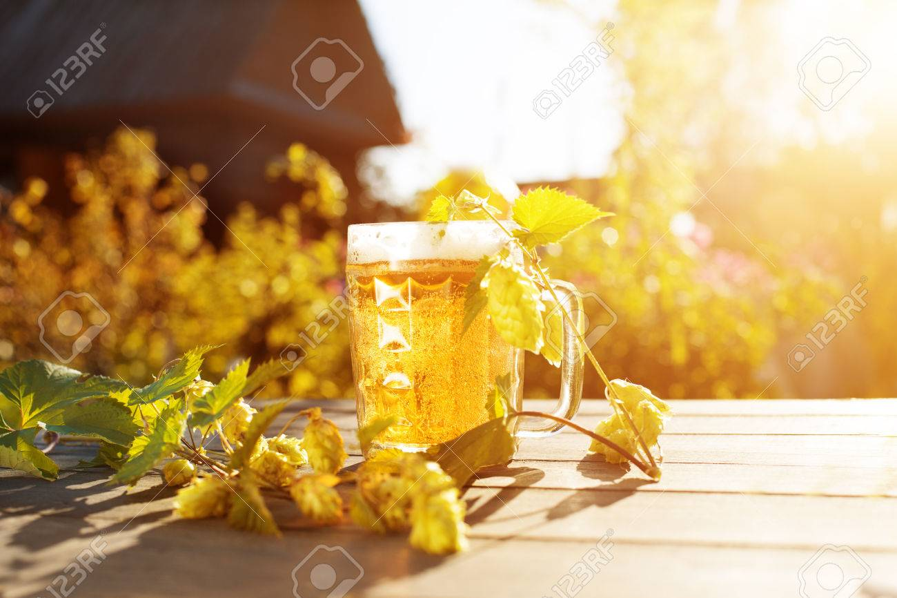 Beer. Mug with beer and hop on sunset summer autumn background. The backlit. Summertime, the party countryside in nature. - 47810115