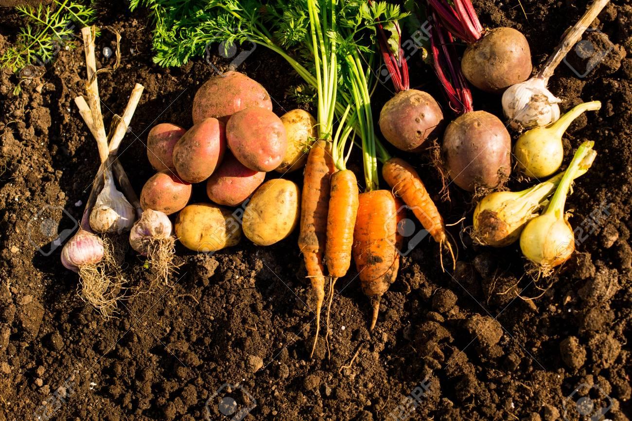 Harvest Of Fresh Vegetables On The Ground, In Garden Background ...