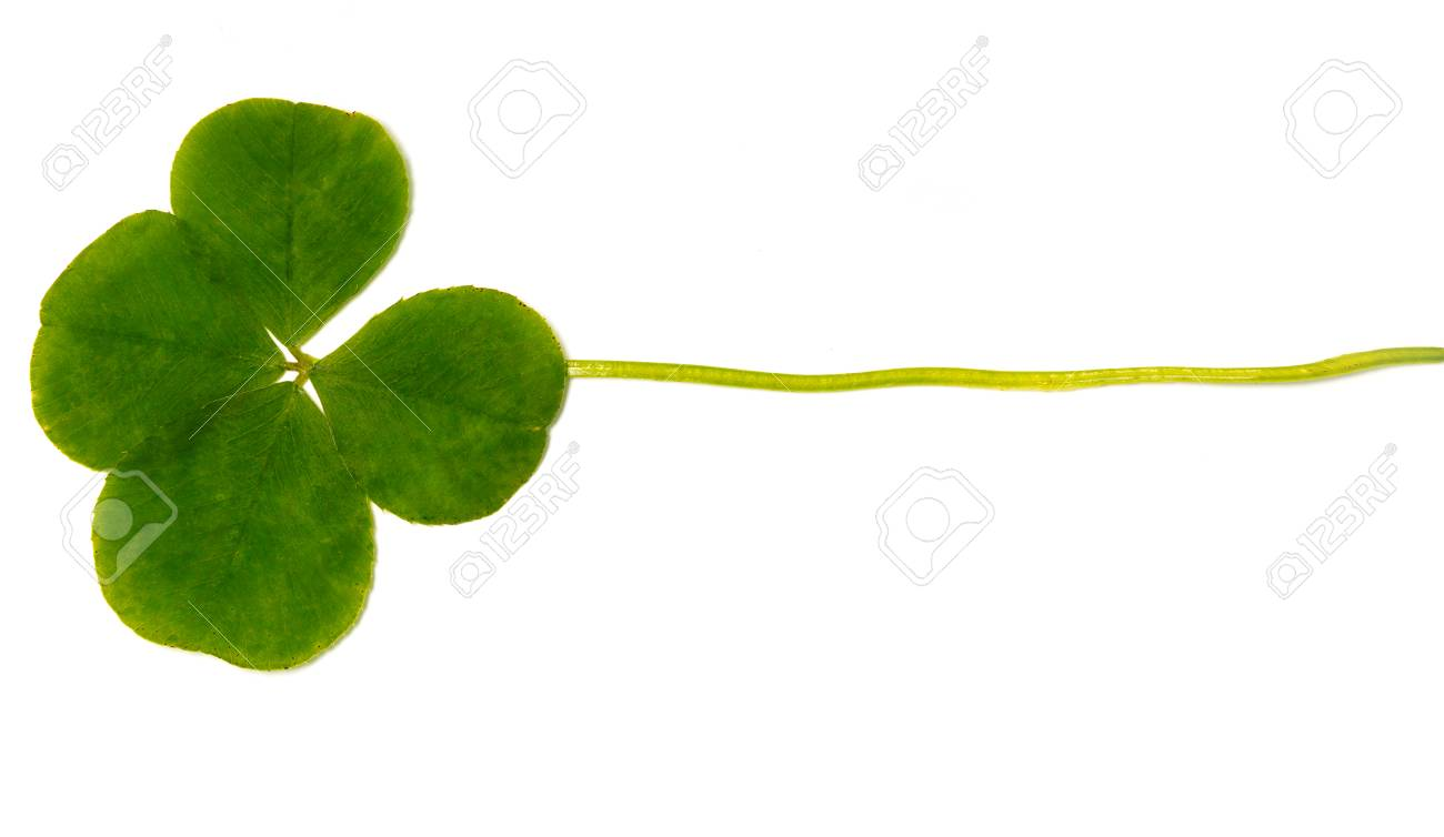 Four Leaf Clover A Plant With 4 Leaves A Symbol Of Luck Happiness