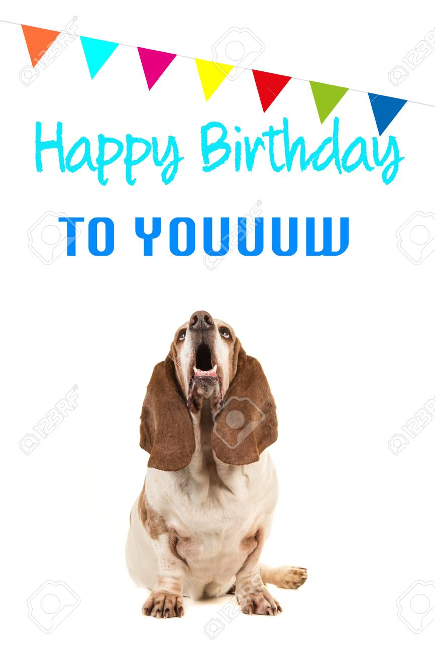 Basset Hound Looking Up And Singing Text Happy Birthday To You On A Card With