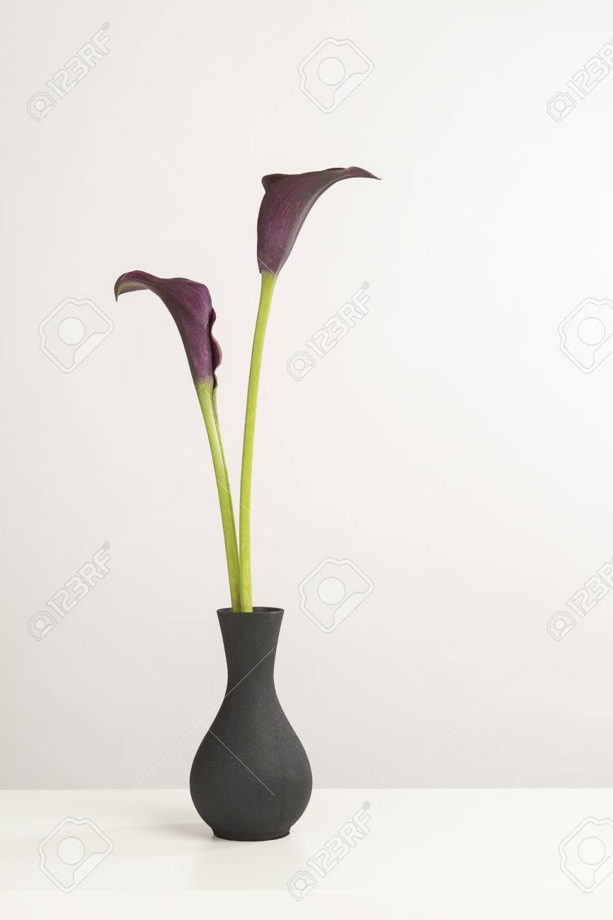 Two black calla lily flowers in a black vase on a white shelf stock photo two black calla lily flowers in a black vase on a white shelf on a white background mightylinksfo