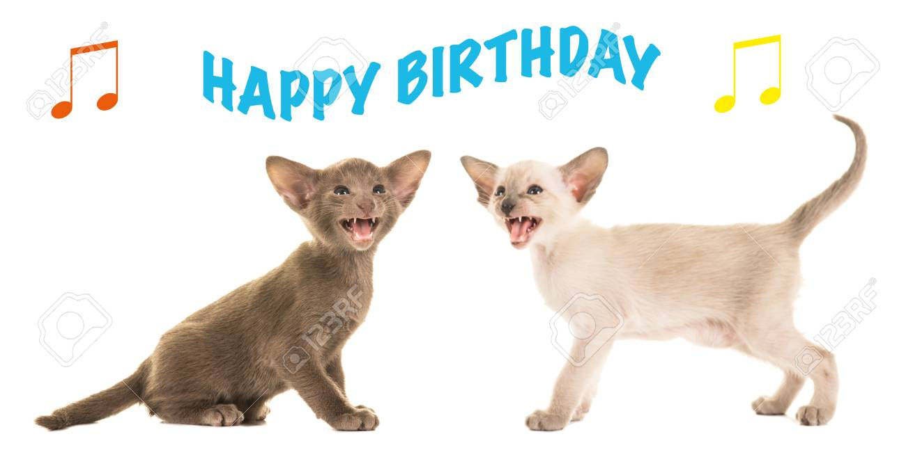 Two Cute Siamese Kittens Singing Happy Birthday As A