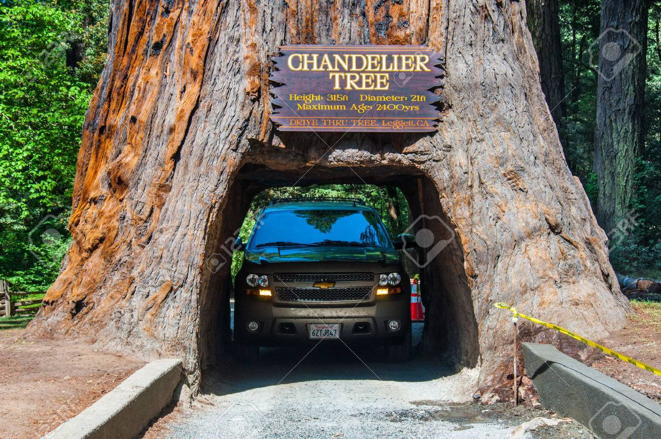 Redwood np california may 21 2013 famous attraction of the drive through tree redwood np california may 21 2013 famous attraction of the redwood national park arubaitofo Gallery