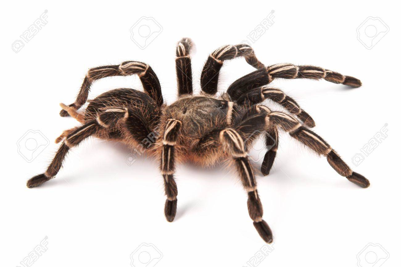 spide sur topsy.one