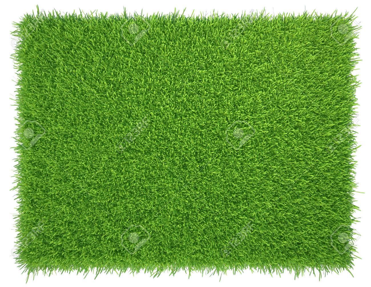Green grass. natural background texture. fresh spring green grass. - 50008724