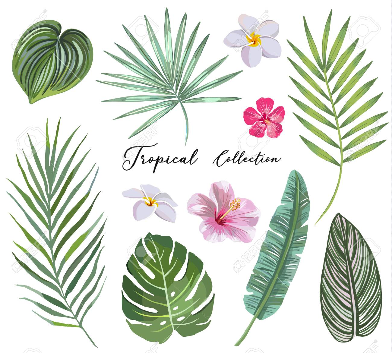 hand drawn Set of tropical leaves and flowers. vector design concept - 122793931