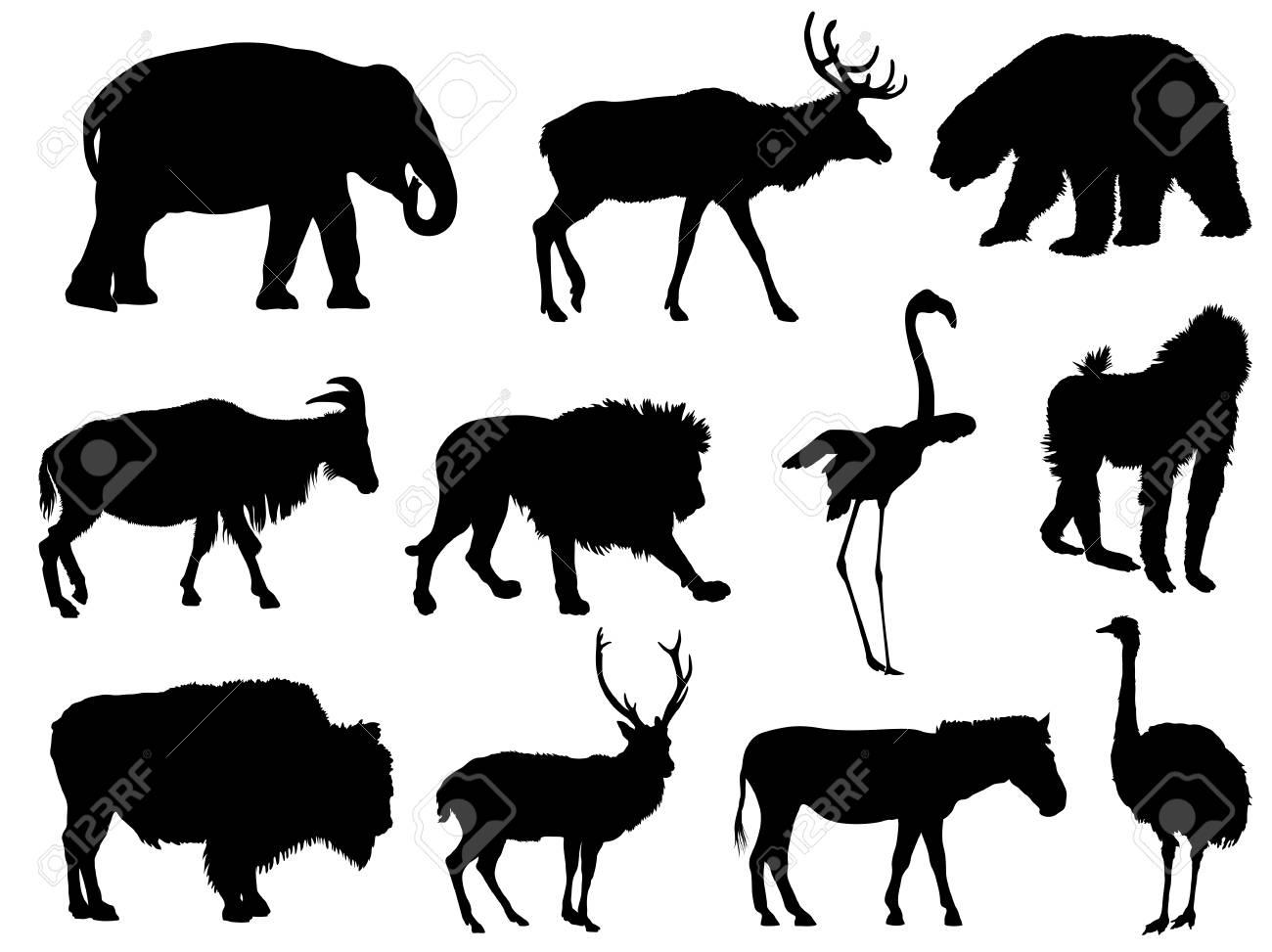 set of animal silhouettes - 52854245