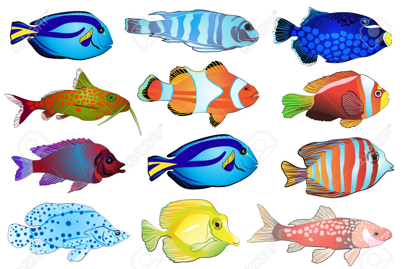 Set Of Aquarium Fish Flat Design Fish Vector Illustration Royalty