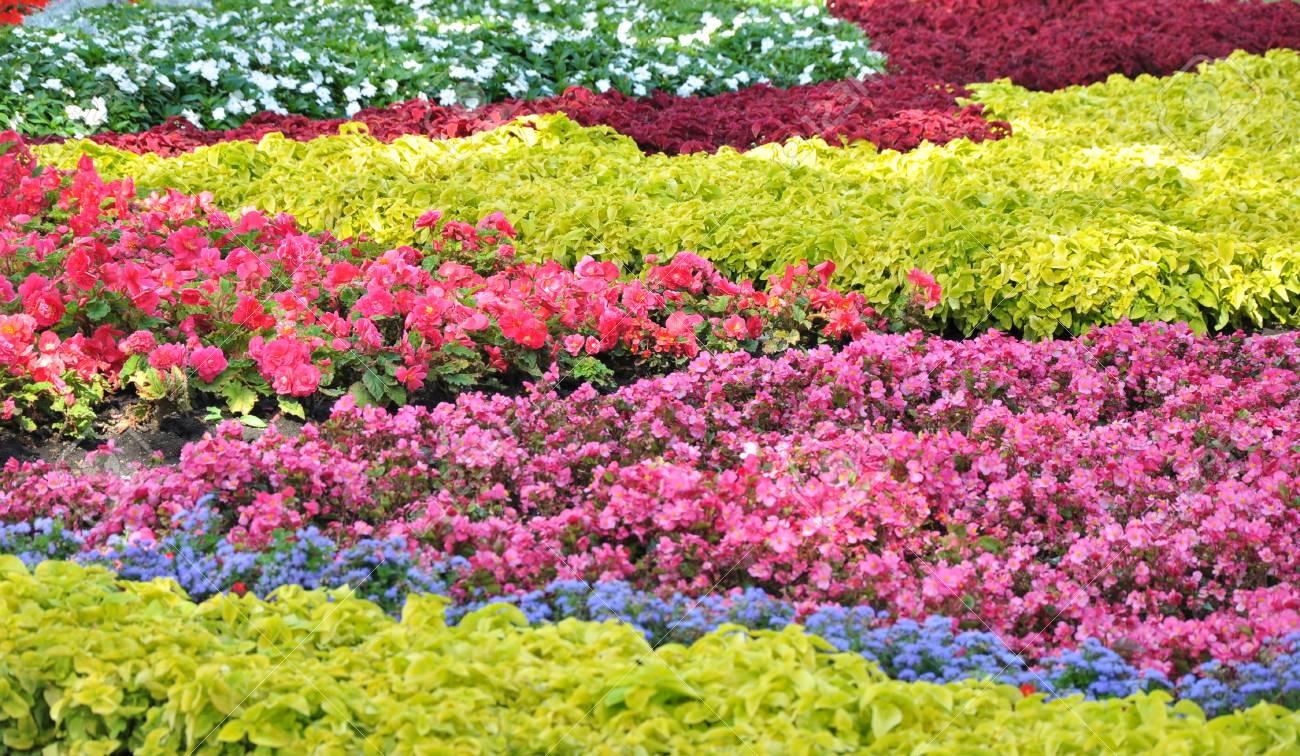 Schöner Garten Blumen Gepflanzt Schematisch Standard Bild   14998873
