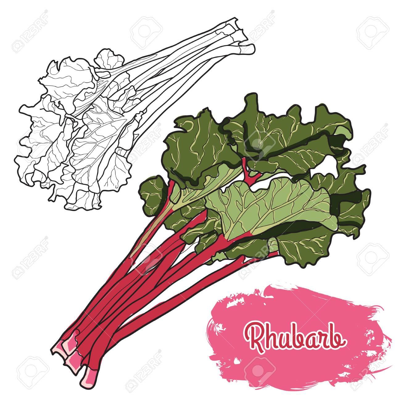 Hand drawn colorful rhubarb - 149835899