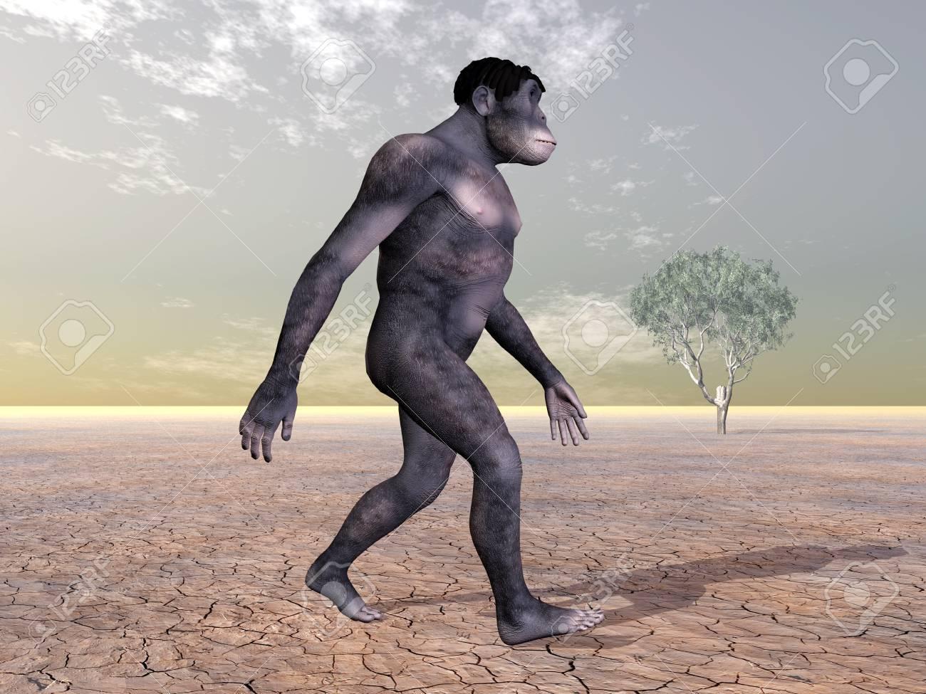 Homo Habilis - Human Evolution Stock Photo - 16898547