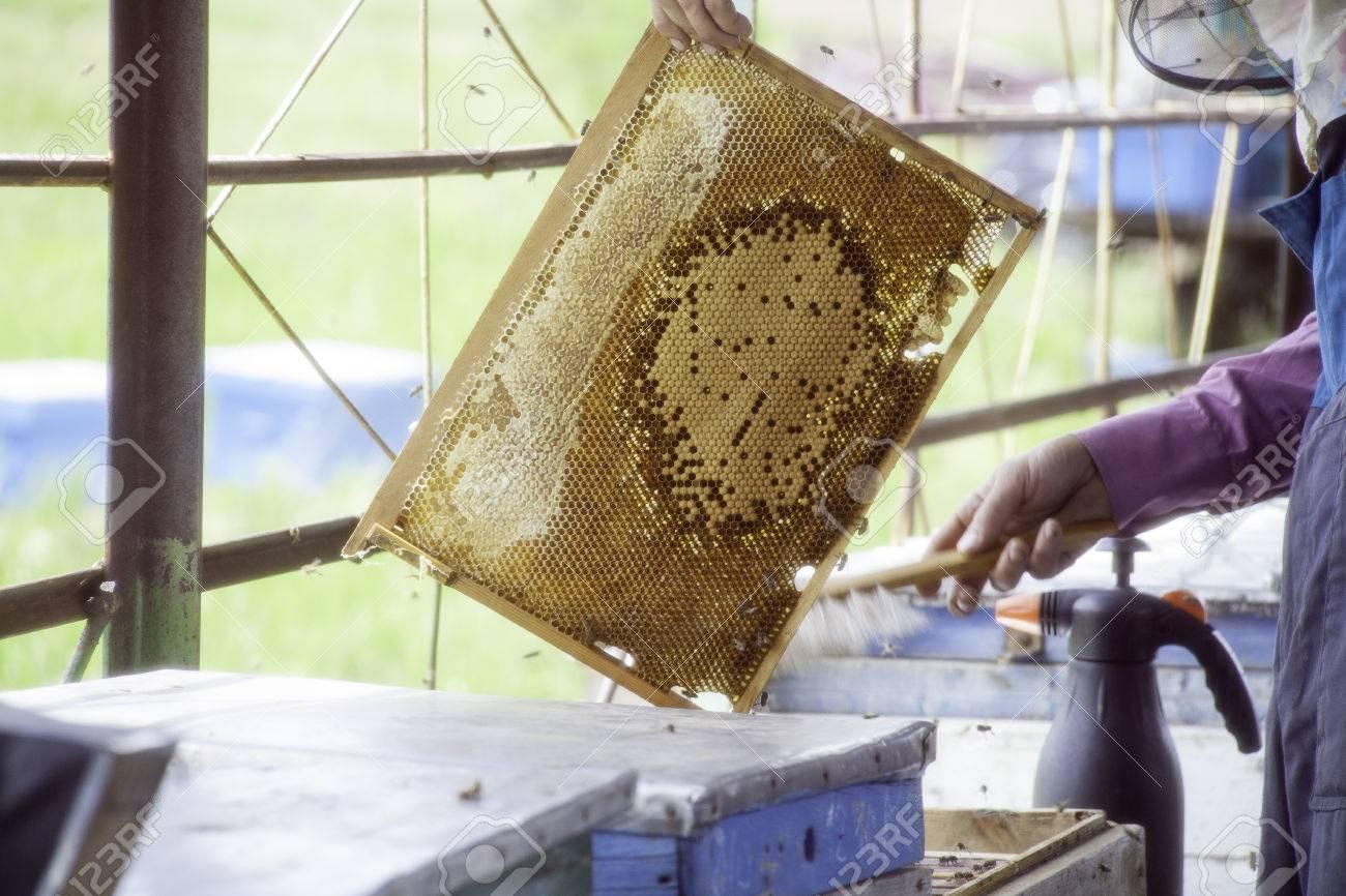 Maestro Apicultor Celebración En Las Manos Bee Panales De Cera En Un ...