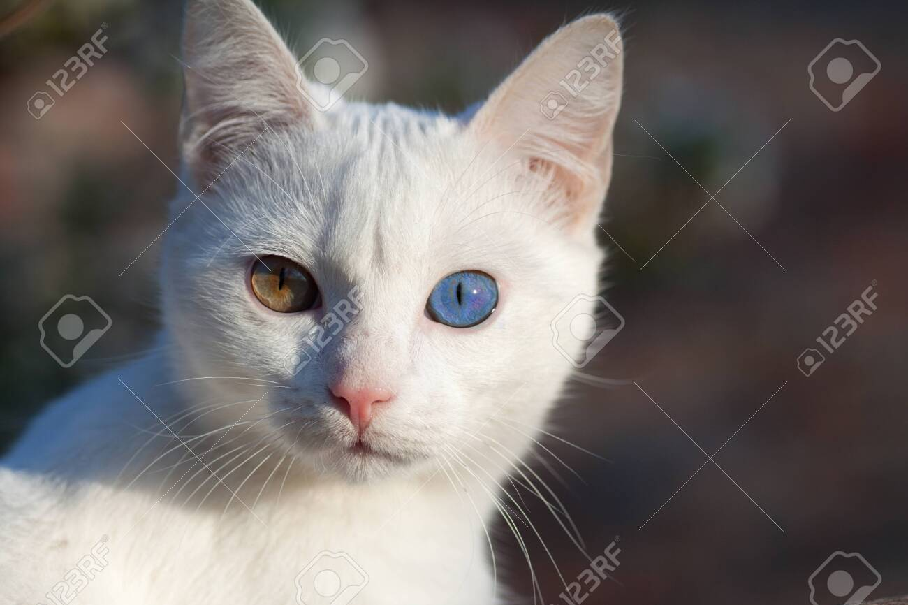 Portrait Of A Domestic Cat Of White Color With Big Eyes Cute Stock Photo Picture And Royalty Free Image Image 120211914