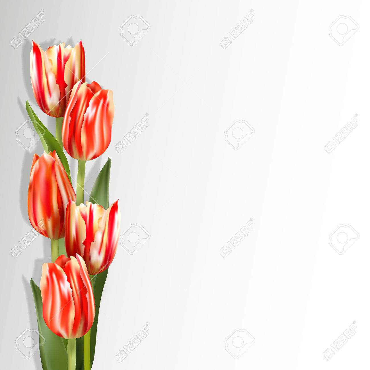 669136e4fc896 Red tulips on a light background with shadow. Motley red flowers on the  left side