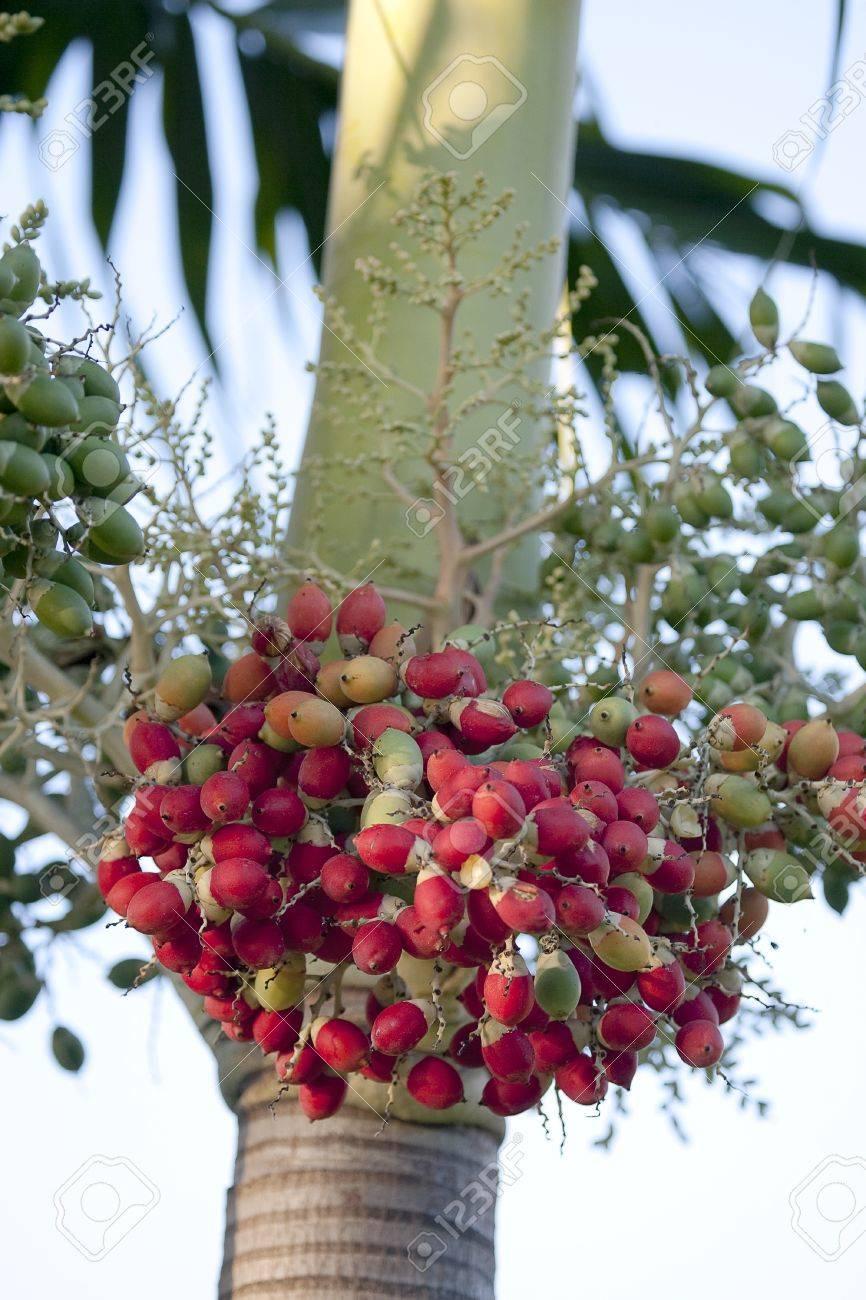 Fruit Dates Stock Photo - 15578752
