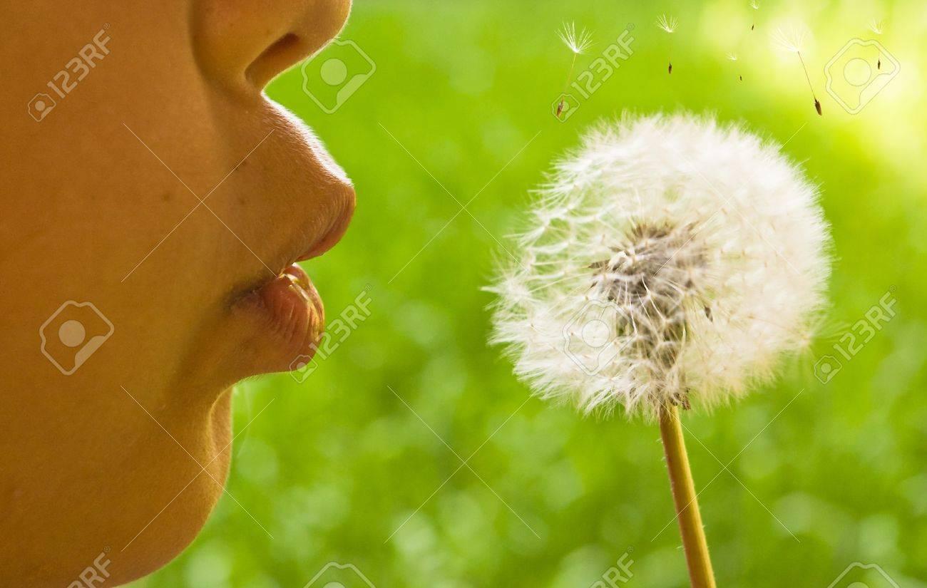 closeup of little girl blowing dandelion - 9586638