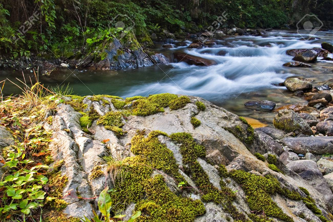 small creek in forest - long exposure Stock Photo - 12826902
