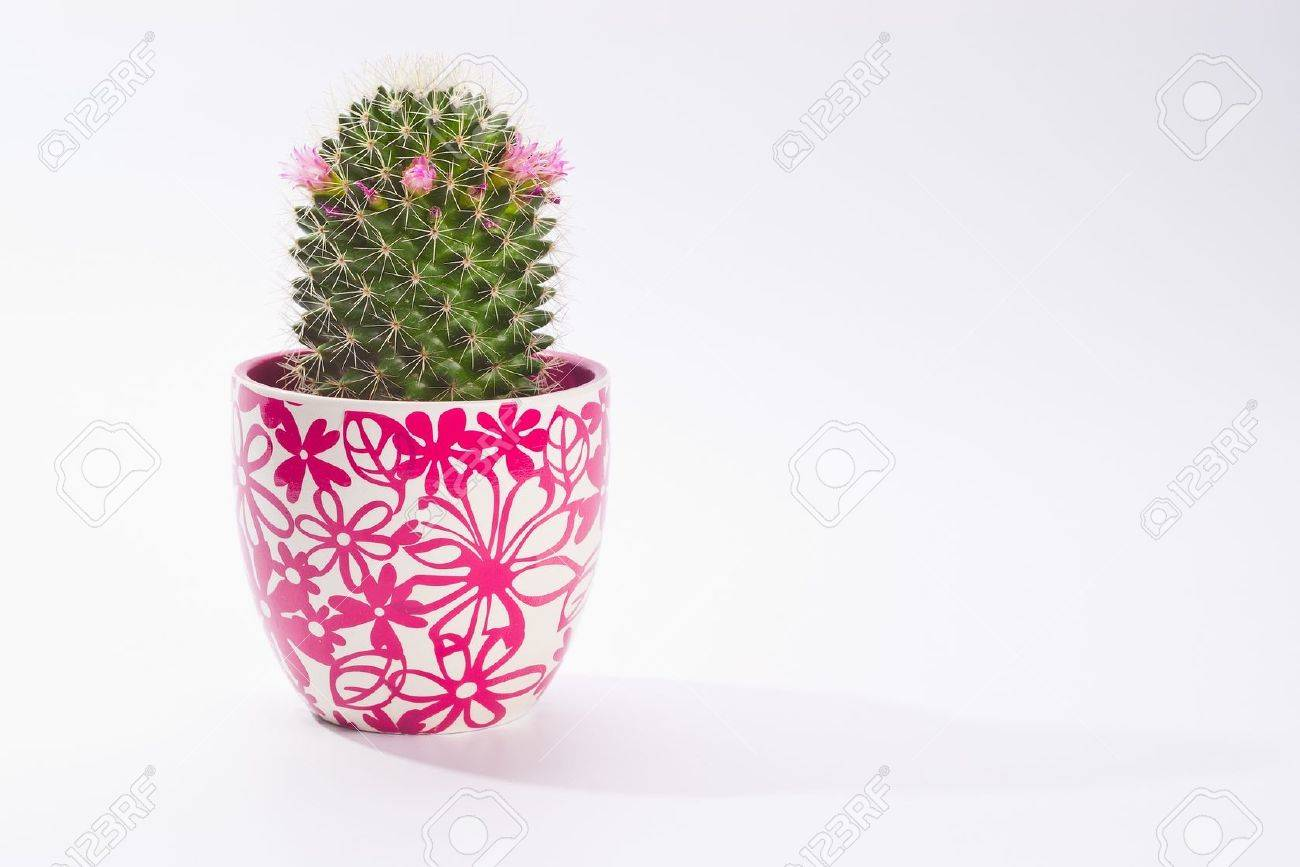 lovely coctu in pot on white with copy space - 13603631