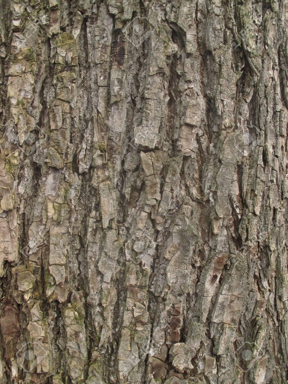 Texture Bois Arbre