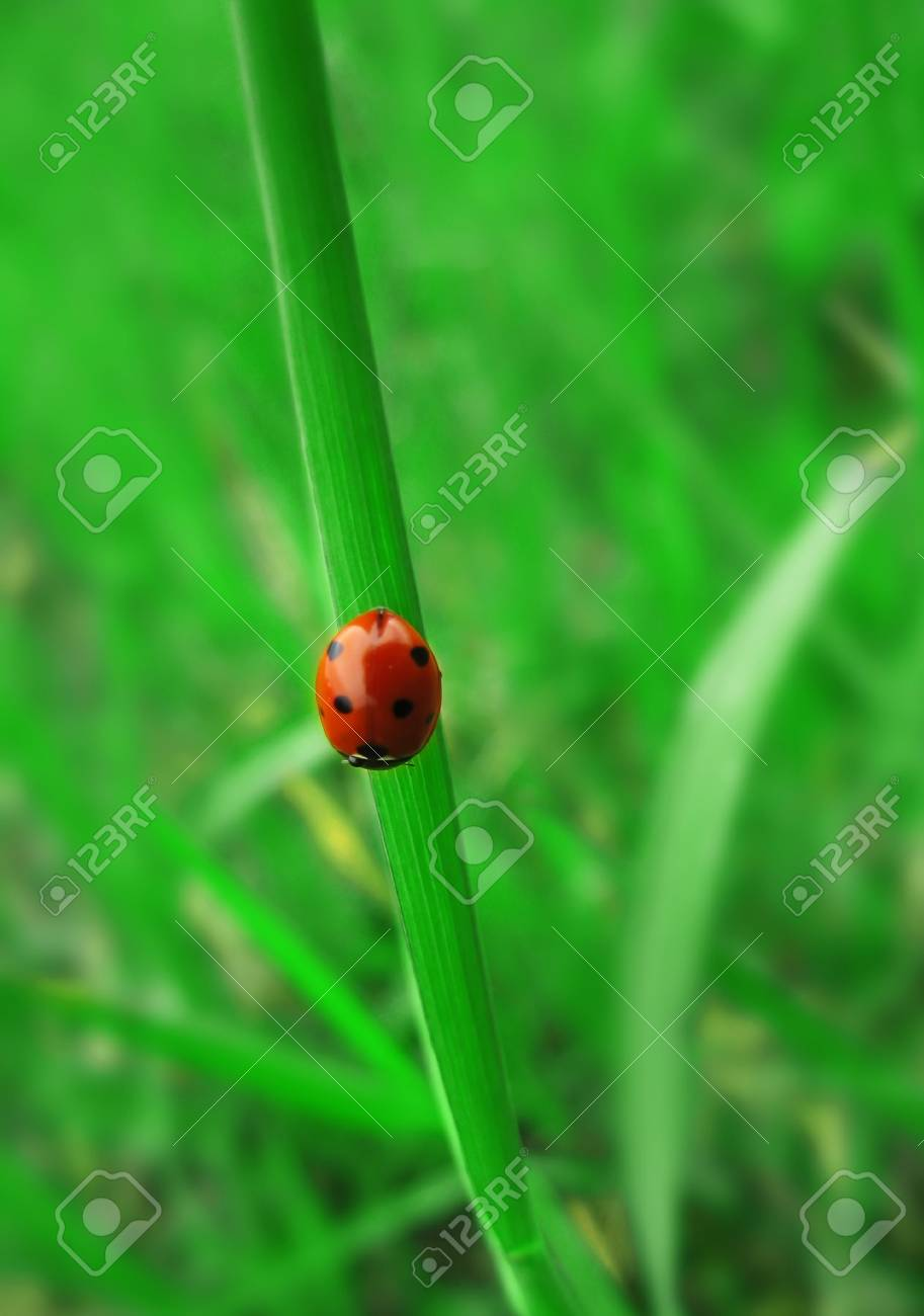 ladybird sitting on the fresh green grass Stock Photo - 5257696