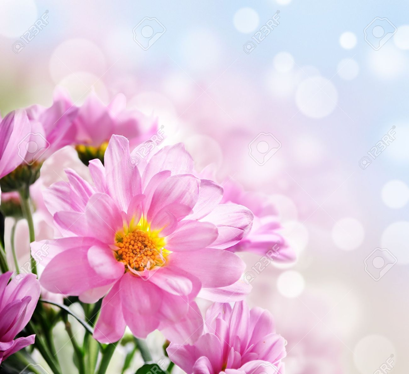 Closeup Of Beautiful Pink Flowers In The Garden Stock Photo Picture
