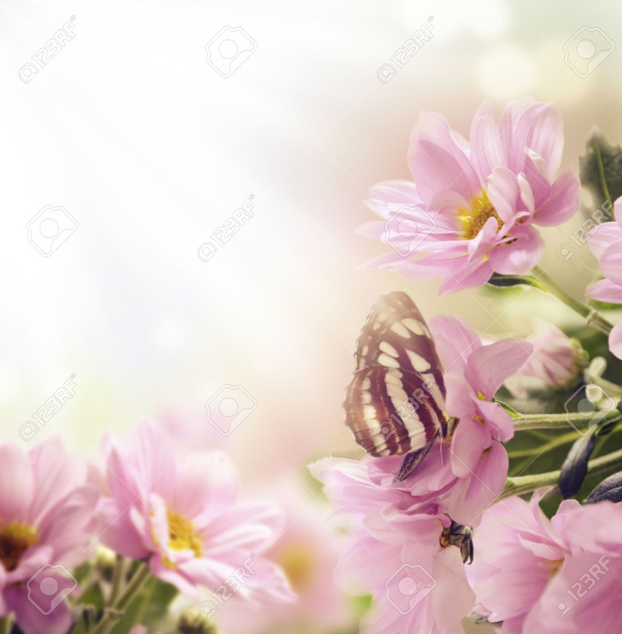 Beautiful pink flowers and butterfly in the garden - 17981756