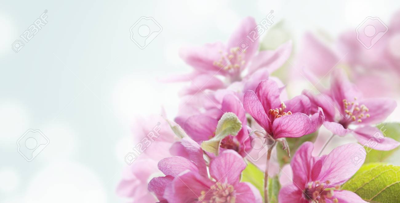 Beautiful Spring Flowers In Japanese Garden Closeup With Bokeh Abstract Light Background Springtime Nature Wallpaper