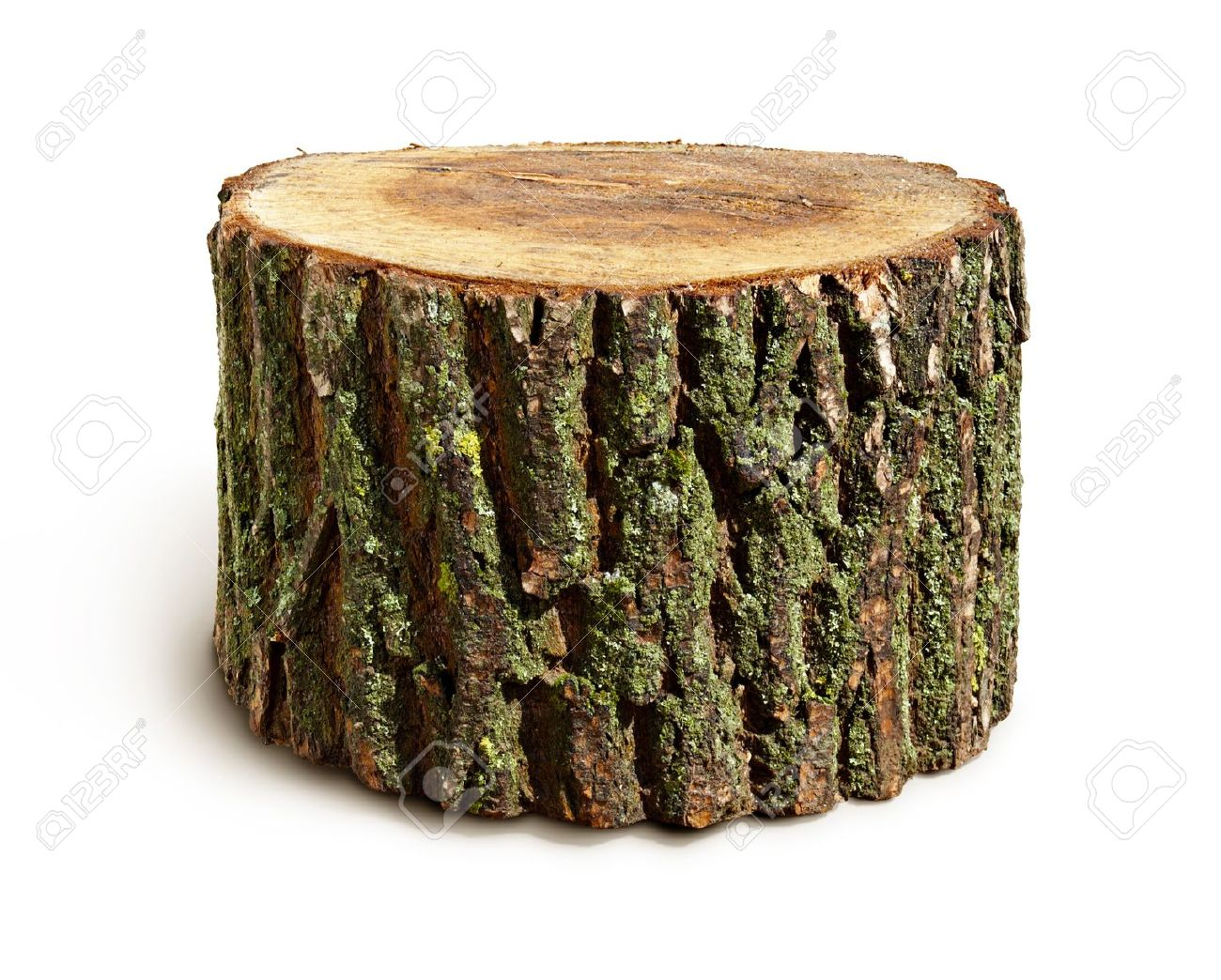 http://previews.123rf.com/images/missanzi/missanzi1205/missanzi120500004/13863974-Stump-isolated-on-a-white-background-Stock-Photo-tree-stump-oak.jpg