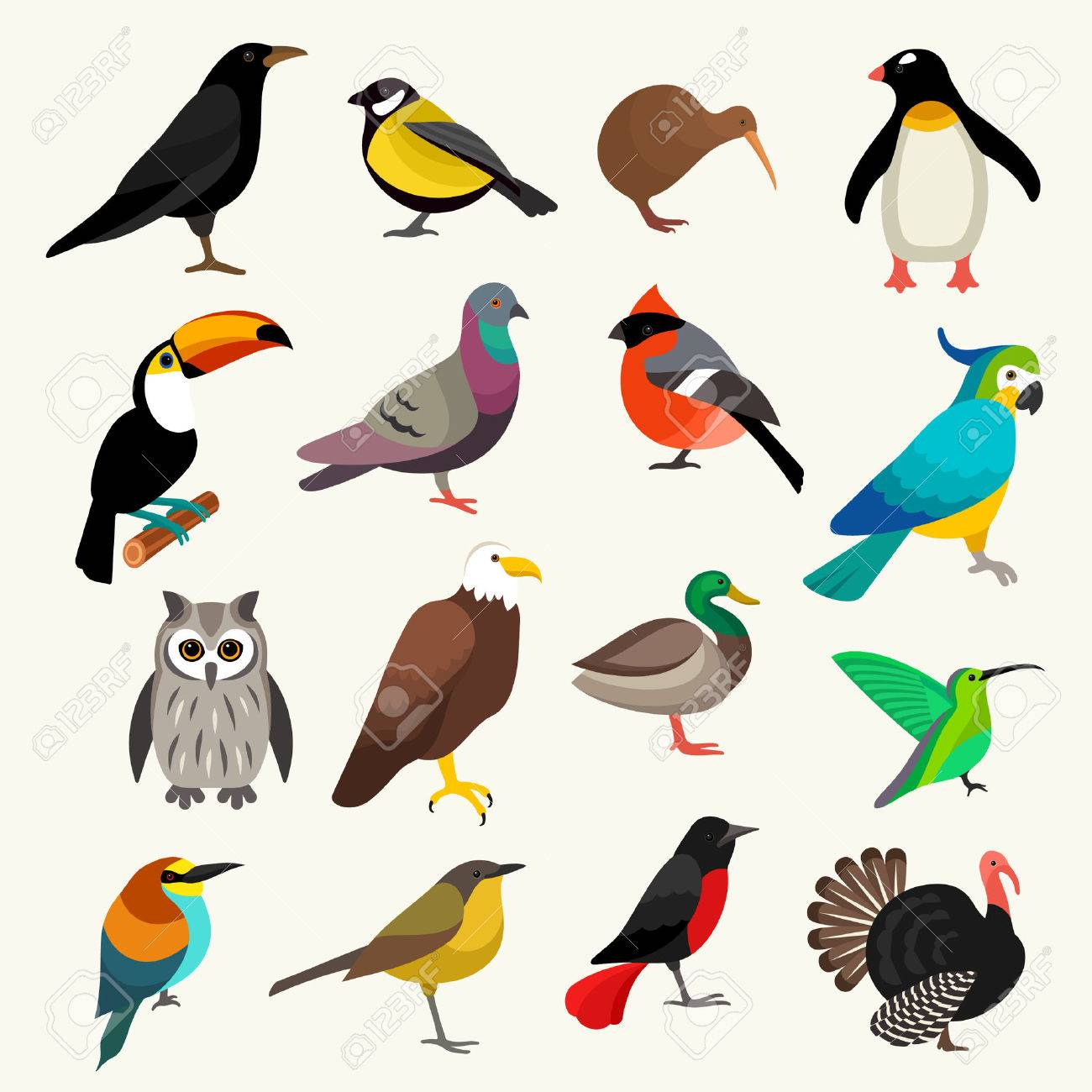 birds - 52359034