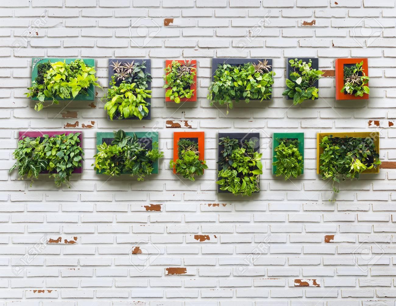 Vertical Garden On White Brick Wall Vintage Style Stock Photo