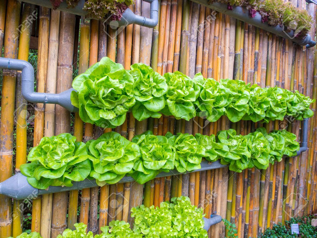 Vegetable In Decorated Wall Vertical Garden Idea In The City Stock ...