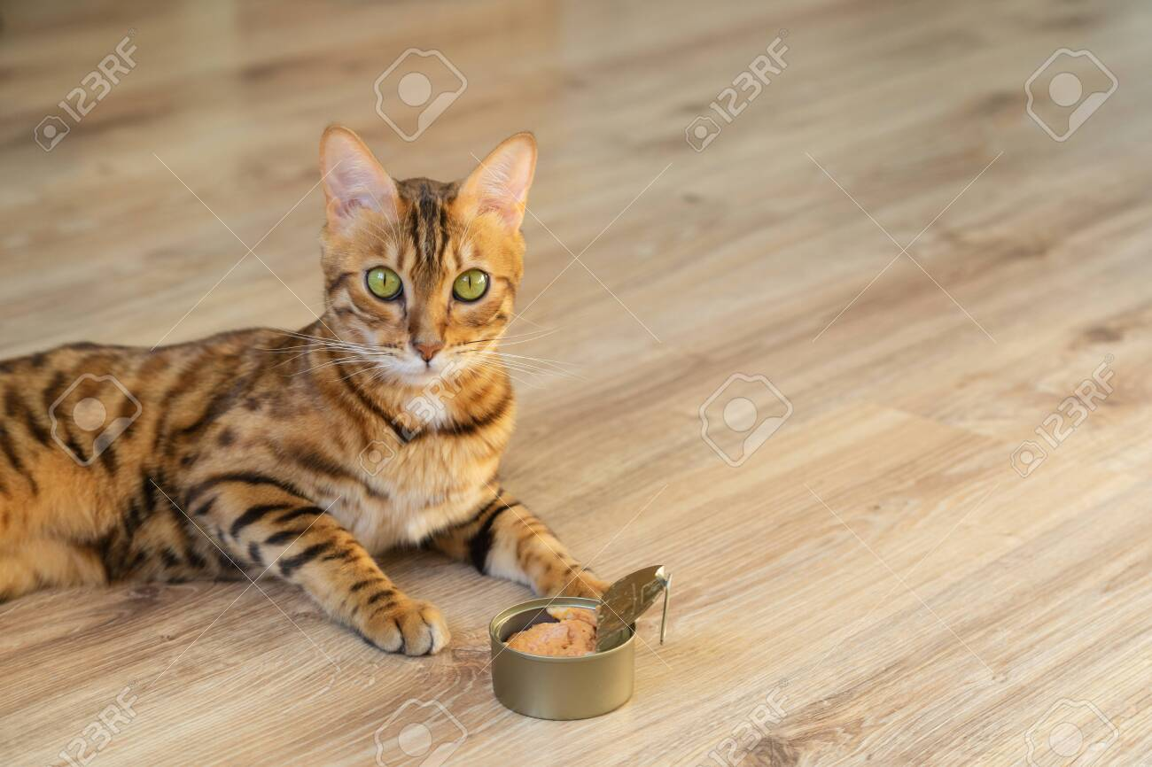 The beloved pet is fed the best cat food. Cat and wet cat food. - 158296679