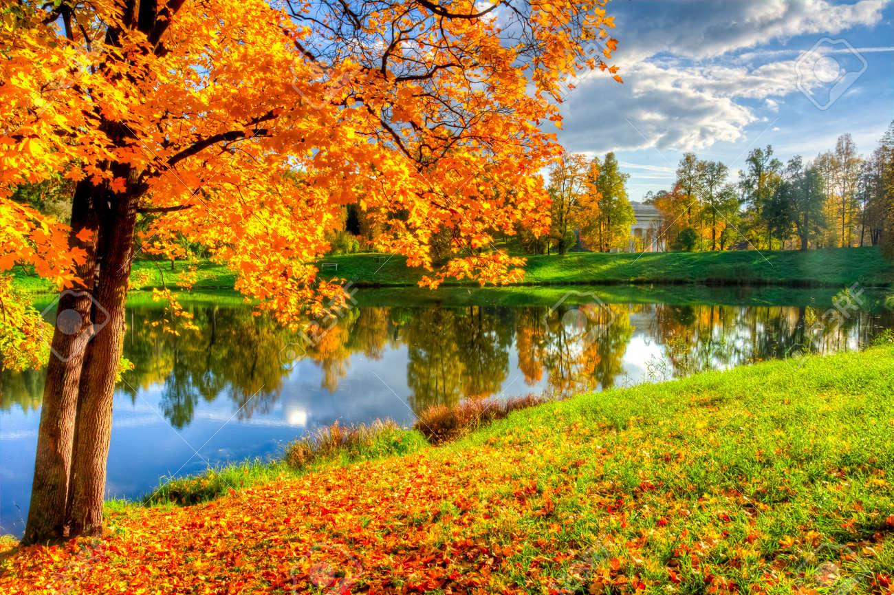 Autumn foliage in Pavlovsky park, Pavlovsk, Saint Petersburg, Russia - 150797135