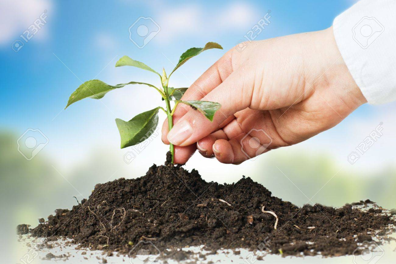 Human hands giving support to a small plant over nature background. Stock Photo - 9229690