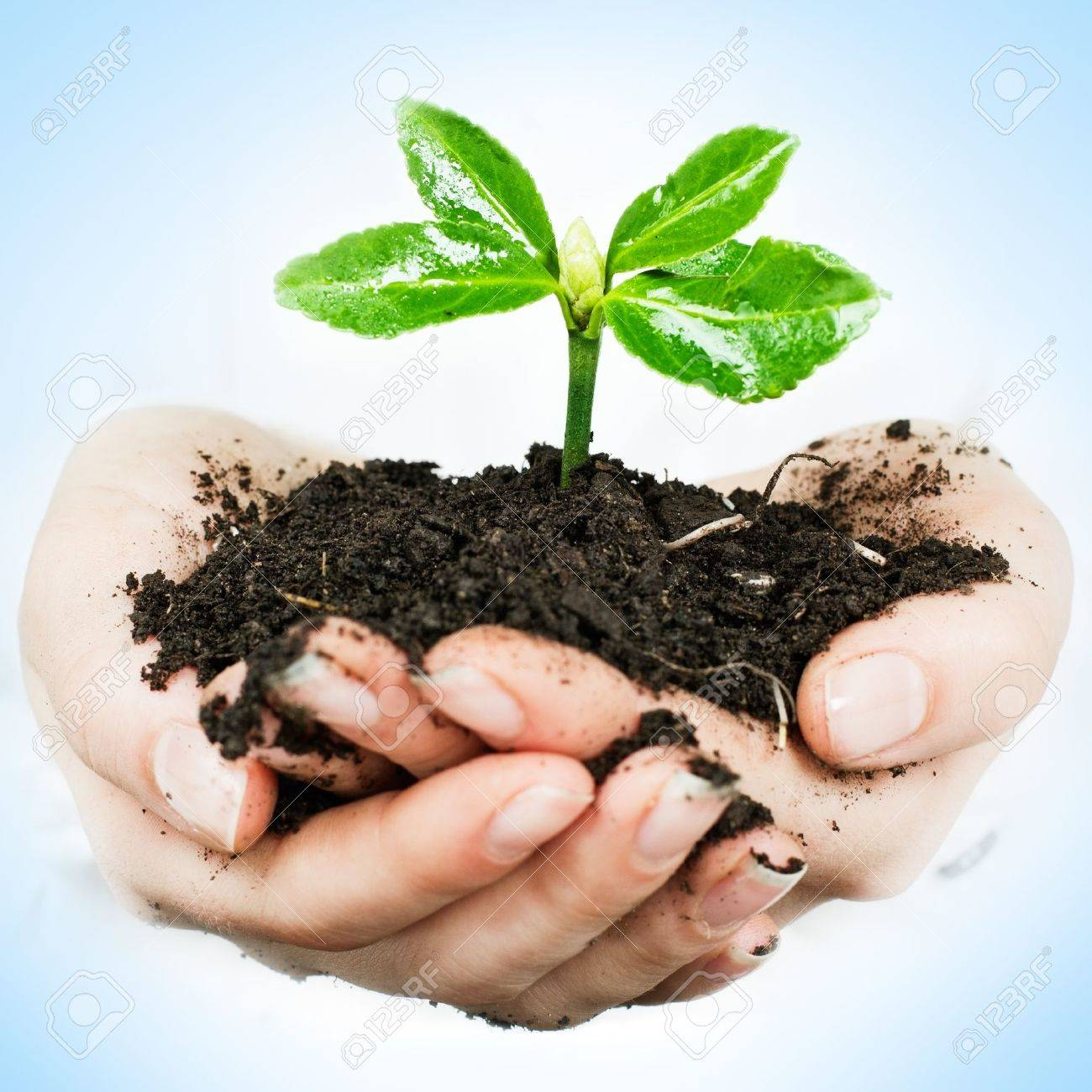 Small plant growing in the human hands - 13168918