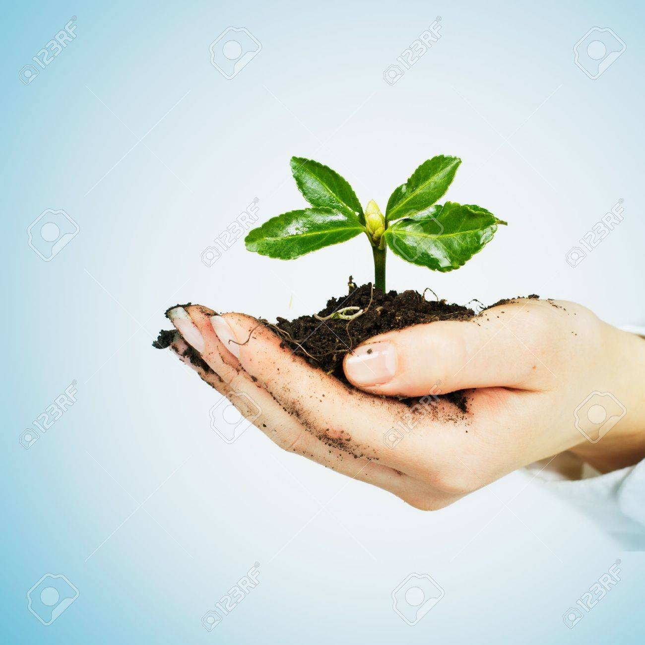 Small plant growing in the human hands - 13330999