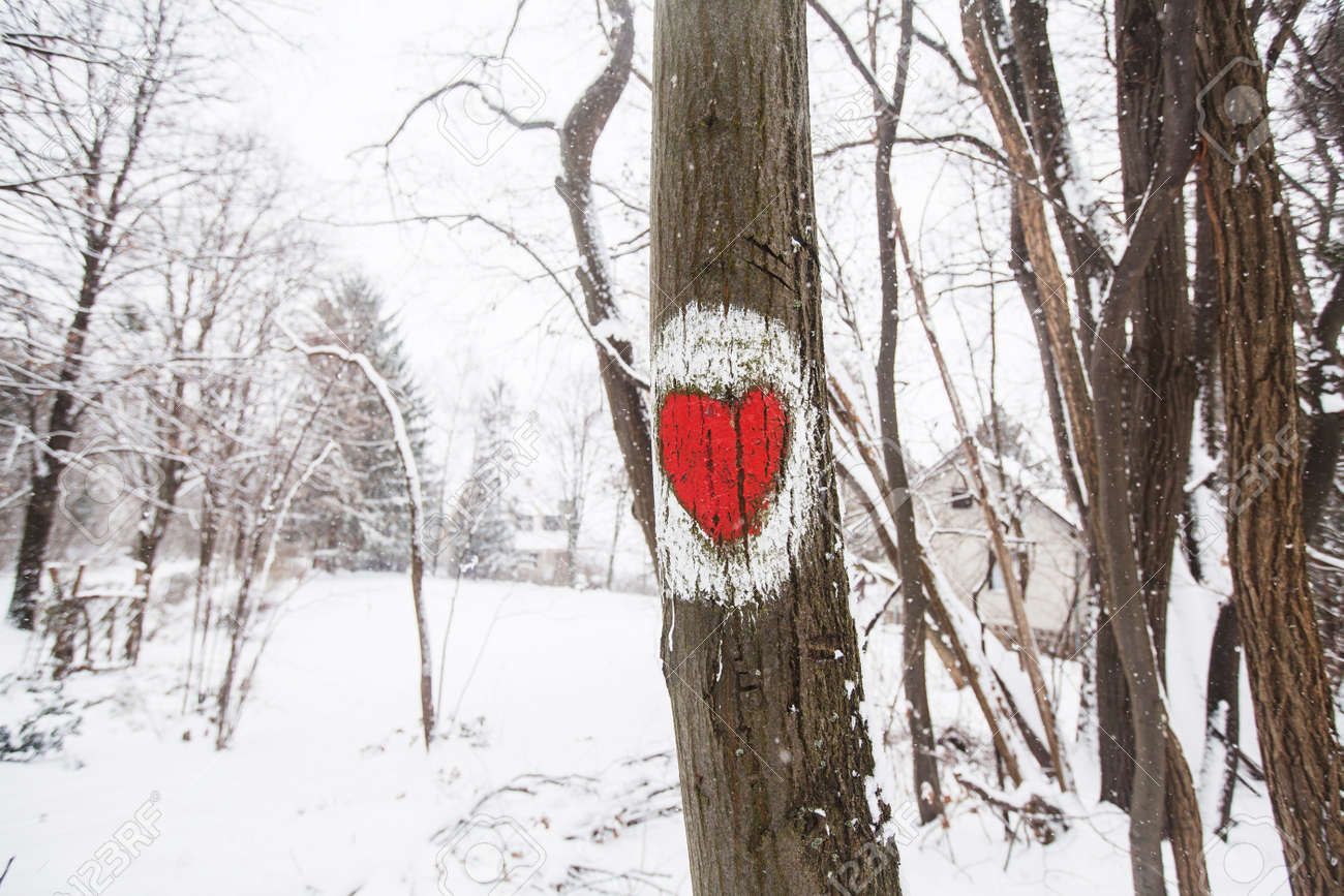 Marked hiking trail, heart shape sign on the tree. Winter cold snowy day. - 167052229