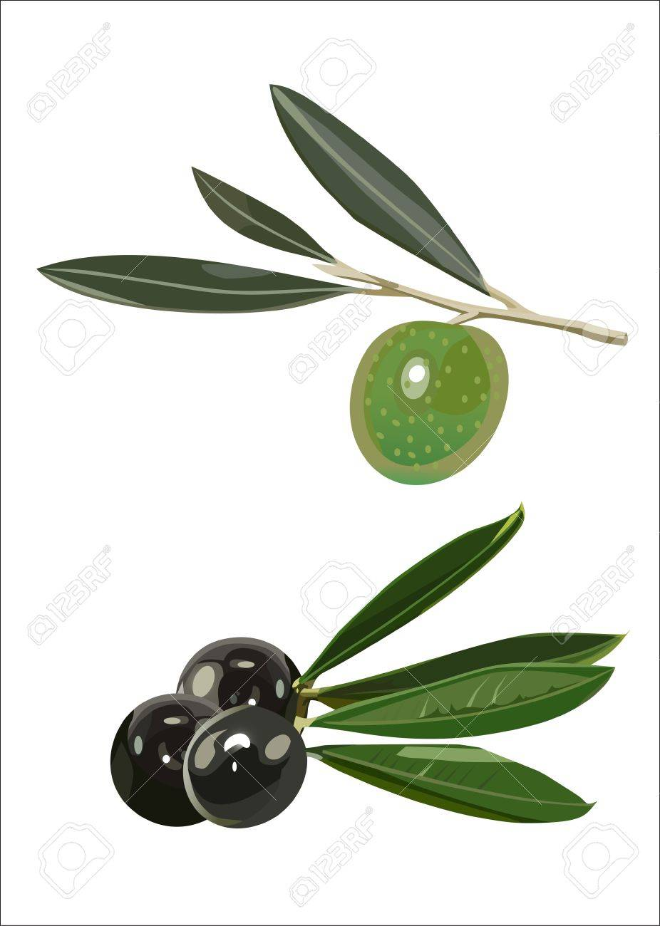 set - olive branches Stock Vector - 14296786
