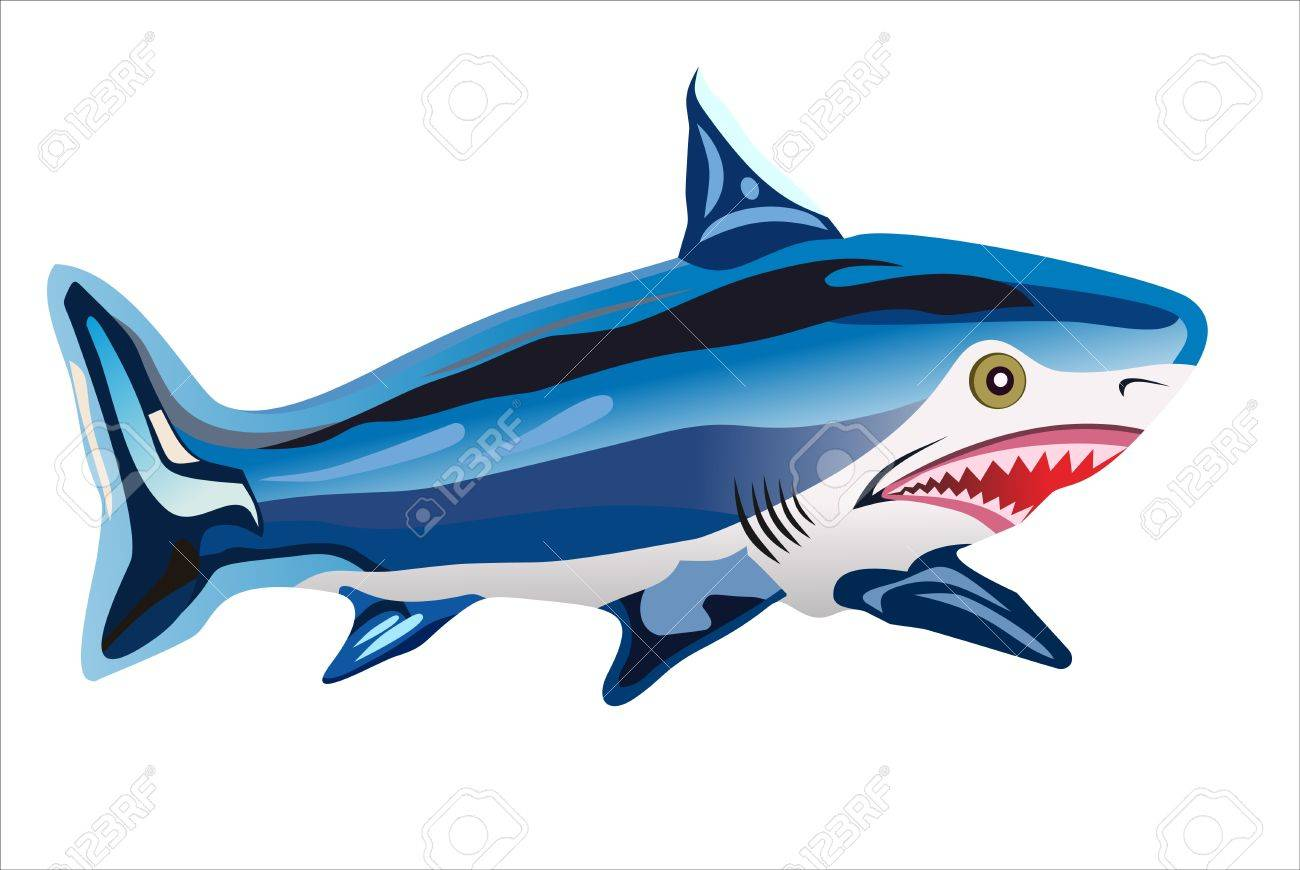 Illustration of a blue and white shark Stock Vector - 15993421