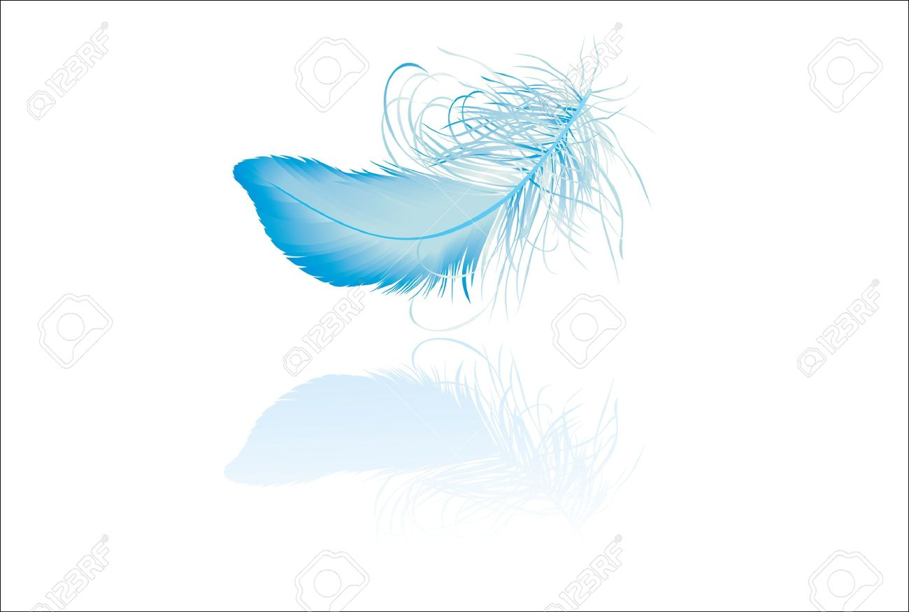 Blue elegant feather with reflection - 16563555